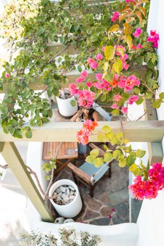 exterior photos porto klaras flowers