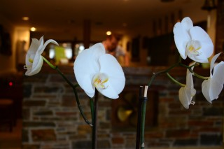gallery porto klaras orchids in the reception of our Kythnos apartments